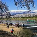 Photos: 白石川の桜船と蔵王