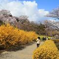 Photos: 花の薫りに包まれて