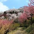 Photos: 桃源郷の散策路