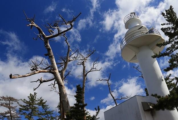 大島灯台と枯れ木