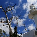 Photos: 大島灯台と枯れ木