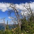 熱風で枯れた樹木