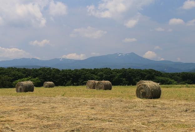 Photos: 高原の牧草ロール