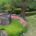 Photos: さつき咲く庭