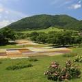 Photos: 緑豊かなやくらい山