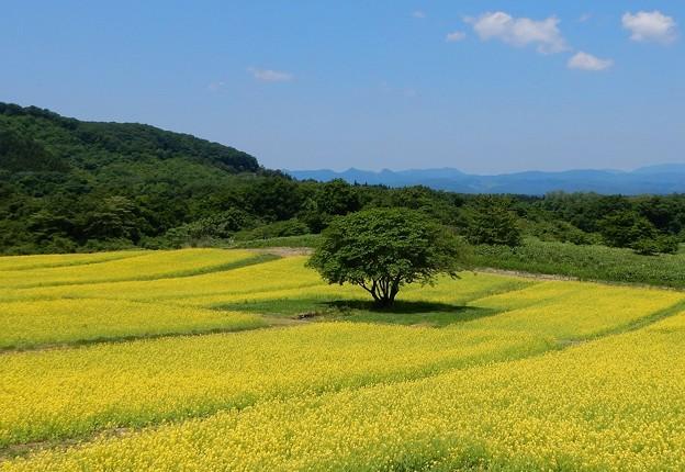 Photos: 快活な愛の花畑