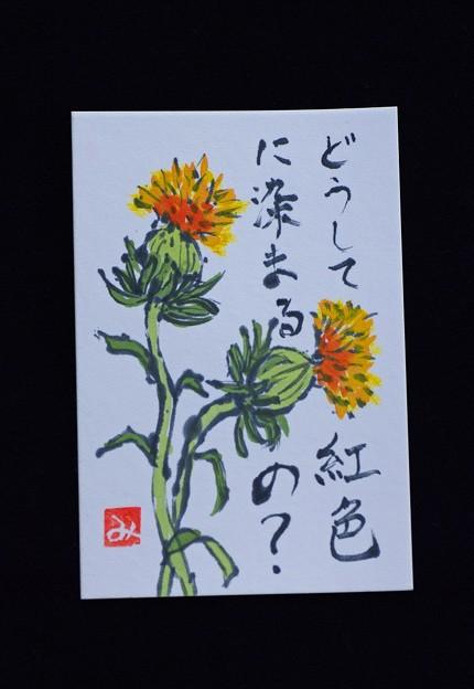 Photos: 紅花の便り