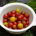 Photos: 収 穫
