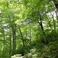 Photos: 森林浴