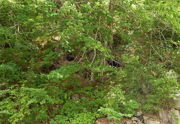 熊冬眠の穴