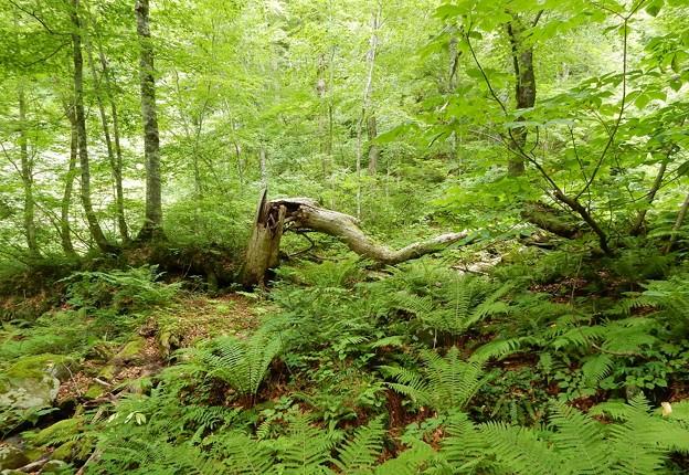 滝への森林の山道