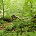 Photos: 滝への森林の山道
