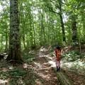ブナ原生林を行く