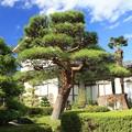 Photos: 赤 松