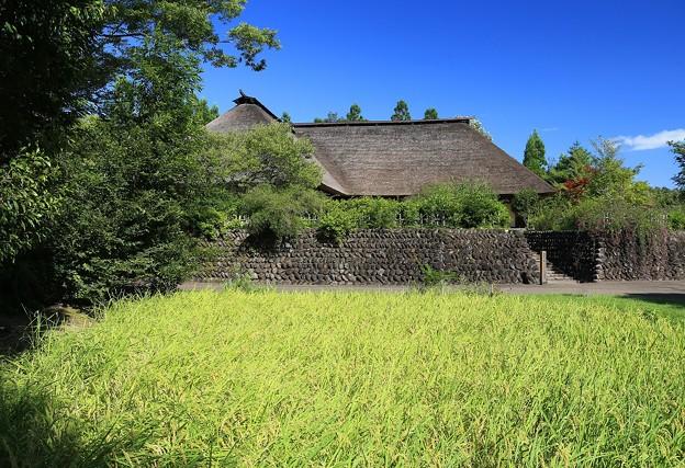 Photos: ふるさとの田圃