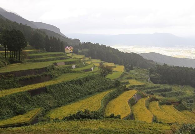 Photos: 岳の棚田