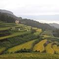 写真: 岳の棚田