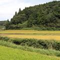 Photos: 七山集落の田んぼ