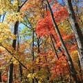 雑木林の彩り