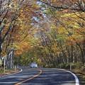 晩秋の高原ロード