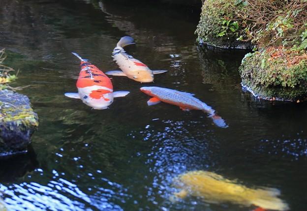 Photos: 池の彩