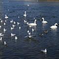 Photos: 渡り鳥の楽園