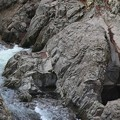 Photos: 岩壁の流れ
