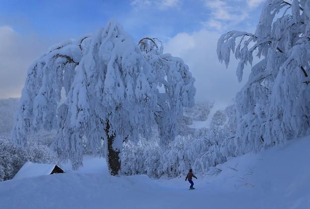 Photos: 雪のもてなし