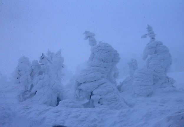 吹雪の中の樹氷群