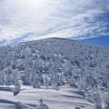 壮大な樹氷群