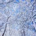 霧氷に雪のお化粧