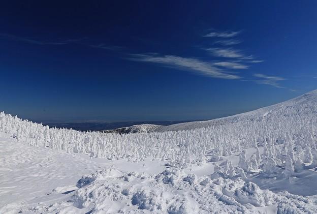 Photos: 樹氷林