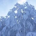 雪に覆われて