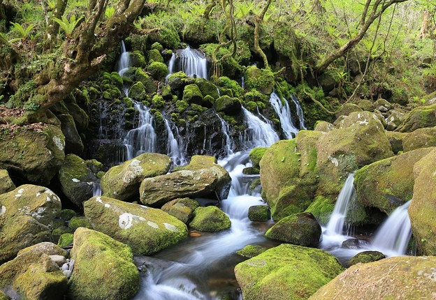 Photos: 苔むした岩肌の伏流水