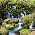 苔むした岩肌の伏流水