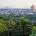Photos: 新緑の杜の都