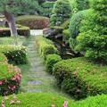 Photos: さつき咲く池の畔