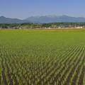 蔵王連峰と田園風景