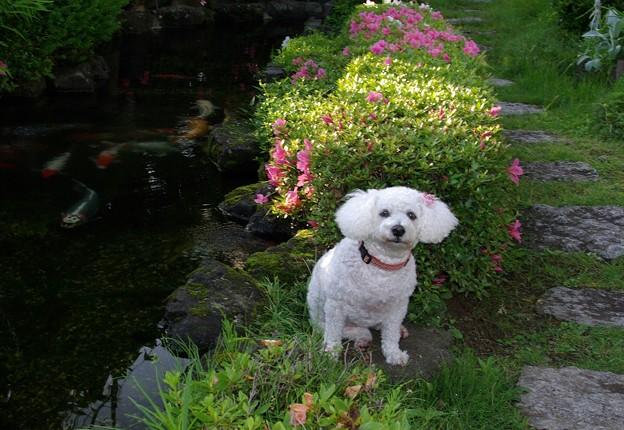 愛犬の懐かしさ