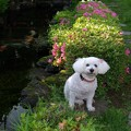 Photos: 愛犬の懐かしさ