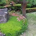 サツキ咲く庭