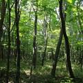 Photos: 静寂の森
