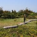 Photos: 高原のお花畑