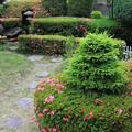蝦夷松のある庭