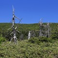 Photos: 枯れ木だが冬は主役