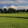 Photos: 故郷の田圃