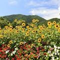 薬莱山と花々