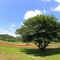 お花畑の大きな木