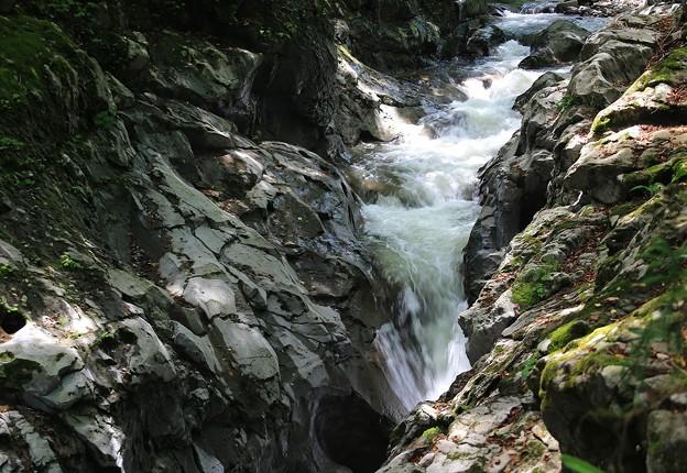 Photos: 渓 流
