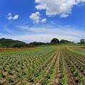 Photos: 高原の浮雲